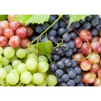 Виноград оптом (от 500 шт.)