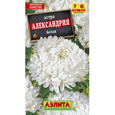 Астра Александрия белая   семена