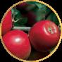 Иммунные сорта яблонь (8)