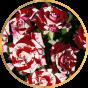 Спрей розы (20)