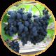 Виноград Поздний