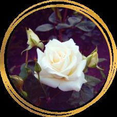 Роза Паскаль