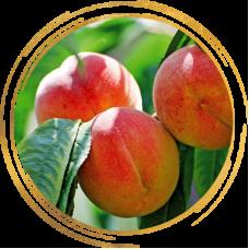 Саженцы персика оптом
