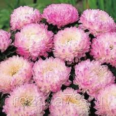 Астра Василиса пионовидная (розовая) Арт. 5671   Семена