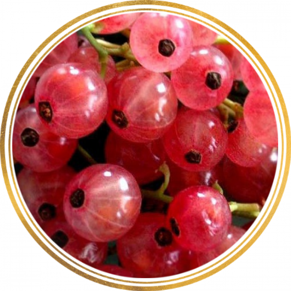 СМОРОДИНА розовая РОЗА ЧАЙР