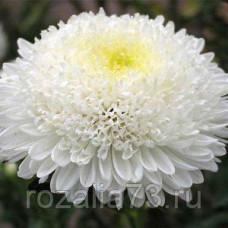 Астра Белое солнце Арт. 5669   Семена