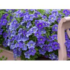 Петуния Надежда низкорослая (голубая с белой серединкой) Арт. 5733
