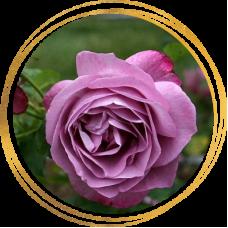 Роза Хаирлум