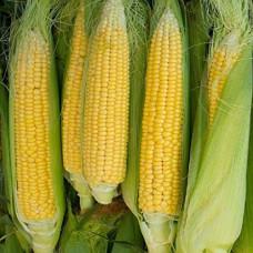 Кукуруза Попкорн Сахарок Арт. 5377