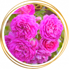 Роза Мелина