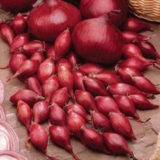 Лук-севок Кармен | Семена