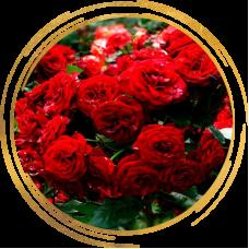 Роза полиантовая Ред Диадем