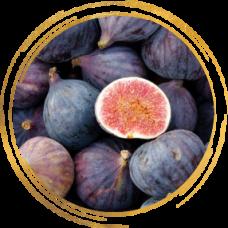 Инжир фиолетовый ремонтантный Черный крымский