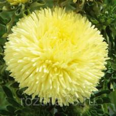 Астра Дюшес Желтая пионовидная Арт. 5098   Семена