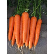 Морковь Нантская 5 суперсочная Арт. 5391