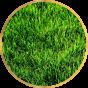 Газонная трава (0)